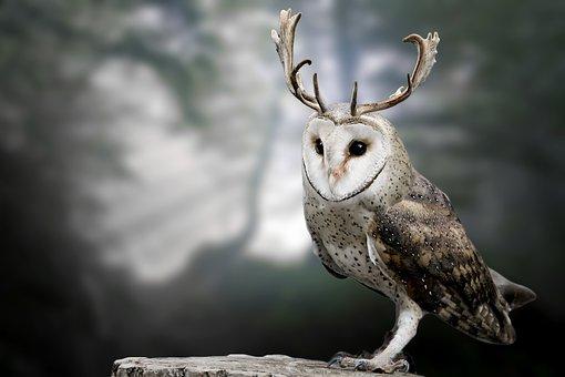 幸福を呼ぶ鳥フクロウの指輪やネックレス が幸せな人生へ導く理由